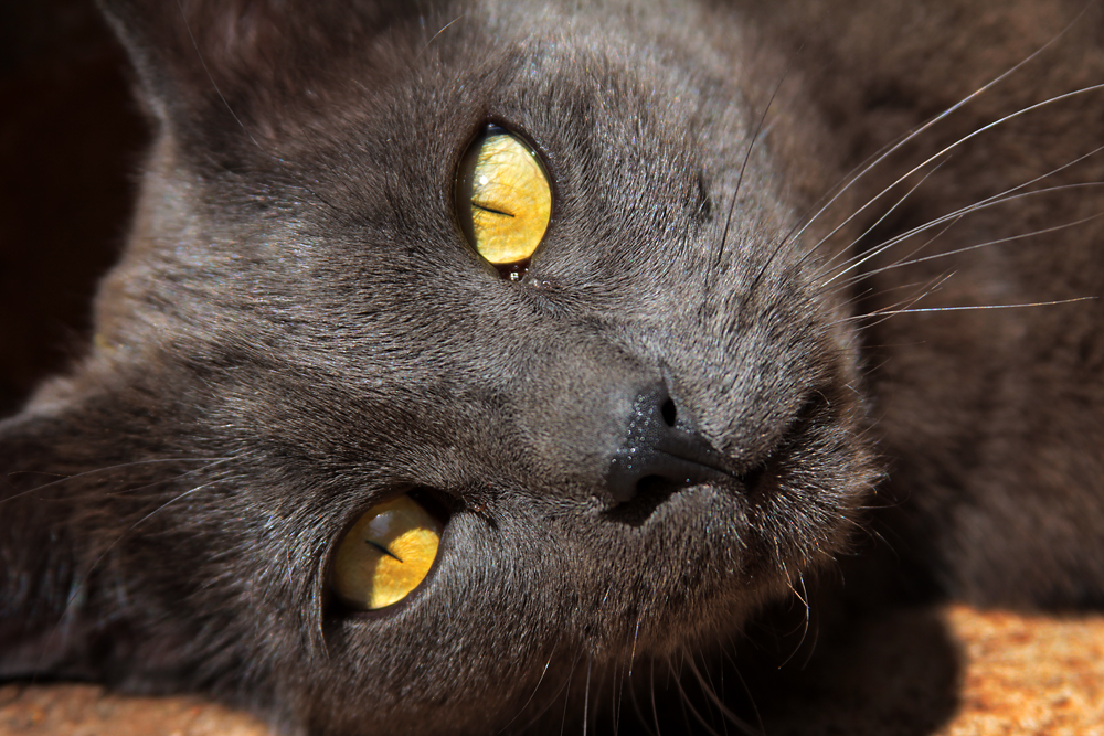 Sad Cat Faces Me with sad expressions on Sad Cat Face
