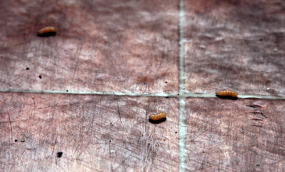 Maggots All Over Kitchen Floor